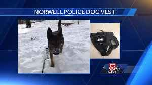 News video: 5 For Good: Police dog being equipped with ballistic vest