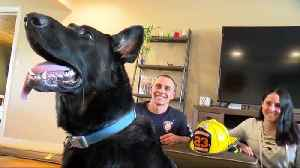 News video: Firefighter adopts dog after 911 call