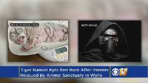 News video: Texas Animal Sanctuary Names New White Tiger Cub After