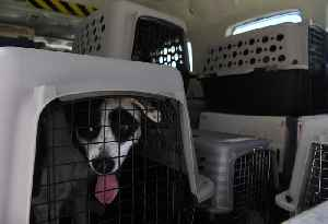 News video: United Airlines is Temporarily Suspending its Animal-Shipping Program