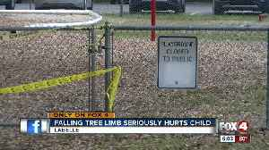 News video: 8-year-old girl suffers fractured skull from falling tree limb