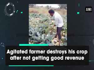 News video: Agitated farmer destroys his crop after not getting good revenue