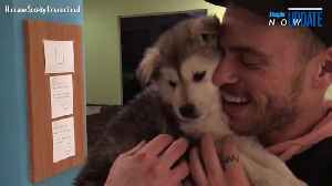 News video: Gus Kenworthy Reunites with Puppy He Rescued from Dog Meat Farm During the Winter Olympics