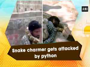 News video: Snake charmer gets attacked by python