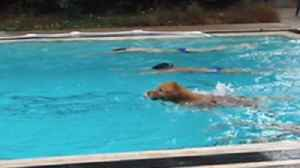 News video: Amazing Dog Wins A Swimming Race Against Humans!