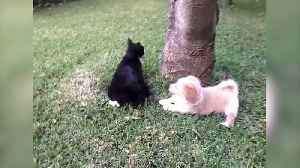 "News video: ""Cats and Dogs Do Get Along After All"""