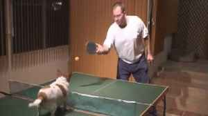 News video: Talented Dog Knows How To Play Ping Pong!
