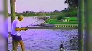 """News video: """"Dog Trying to Catch Fish on Dock Falls into Water"""""""