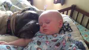 """News video: """"A Baby and His Canine Companion Taking A Restful Snooze"""""""