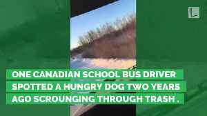 News video: For 2 Years, Bus Driver Has Quietly Fed Stray Dog. Now Dog Sits & Waits Each Day to Greet Her