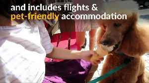 News video: Pets on jets: luxury travel agency pampers pooches in Hong Kong