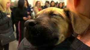 News video: How much is that puppy in the Saks window?