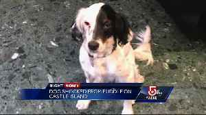 News video: Dog suffers electric shock on Castle Island