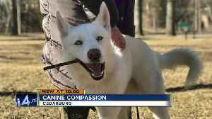 News video: 3-legged dog in animal mistreatment case adopted by new family