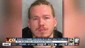 News video: Man accused of beating his dog to death with glass bottle wanted