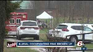 News video: Illegal cockfighting ring broken up in Brown County, more than 100 birds seized
