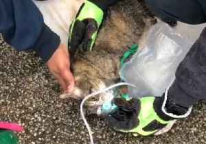 News video: St. Louis Firefighters Use Oxygen Mask to Resuscitate Cat