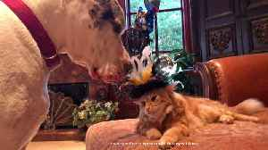 News video: Funny Great Danes Steal Cat's Party Hat ~ Cat Swats Dog