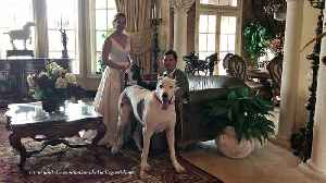 News video: Happy Max and Katie the Great Danes Share Wedding Love at Casa Bella Estate
