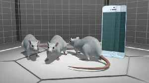 News video: New studies link cell phone radiation with cancers