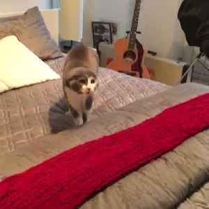 News video: Cat terrified of owner's horse mask