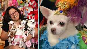News video: Meet The Doggie Dress Designer Whose Fashions Have Inspired So Many!