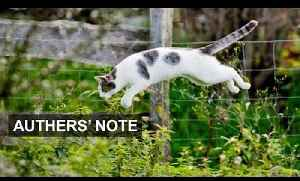 News video: Dead cat bounce? | Authers' Note
