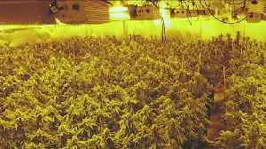 News video: U.S. Seizes Pot-Growing Houses in California Tied to China-Based Crime Organization