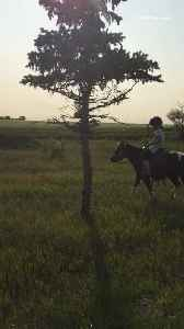 News video: Girl on horse rides into tree