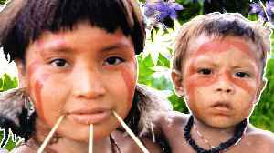 News video: The Yanomami, a Long Isolated Ethnic Group