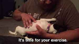 """News video: """"Pets Stretching It Out 