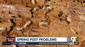 News video: Think you 'mite' have a creepy-crawly problem? How to get rid of termites in your home