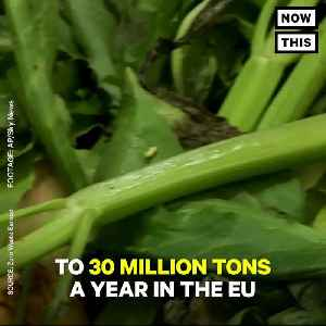 News video: Plastic Packaging Might Be Increasing Food Waste