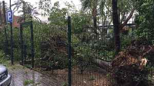 News video: Storm Uproots Trees and Damages Property in Seville
