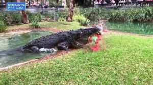 News video: Spectacular Show of Crocodile Bite Strength Caught on Video in Australia