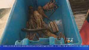 News video: The Business Of Lobster