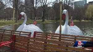 News video: Boston's historic swan boats open on cold, winter-like spring weekend