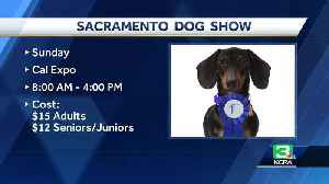 News video: Sacramento Dog Show is one of the longest-standing shows in nation