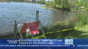 News video: Onlookers Hope To Catch Glimpse Of Reported Alligator In Elk Grove Lake