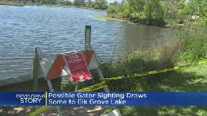 News video: Wildlife Officials Say Reported Alligator Sighting In Elk Grove Lake A Hoax