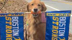 News video: Therapy Dog Waves 'Boston Strong' Flags to Cheer On Marathon Runners
