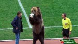 News video: Trained Bear Kicks Off Proceedings in Russian Club Soccer Game