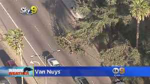 News video: Trees Downed As Heavy Winds Whip Through SoCal