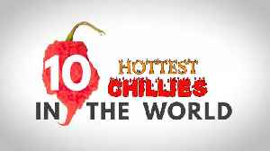 News video: Top 10 hottest chillies in the world