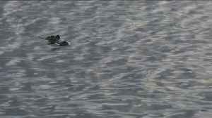 News video: Wildlife Officials Say Alligator Sighting in California Lake is a Hoax