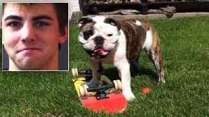 News video: Suspect Arrested in Disappearance of Gus the Skateboarding Bulldog