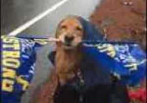 News video: Flag-Waving Golden Retriever Cheers on Boston Marathon Runners