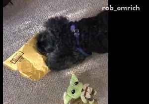 News video: Dog is a master at opening deliveries