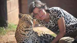 News video: Leopard Lady Living With Wild Cats | BEAST BUDDIES