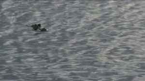News video: Wildlife Officials Say Picture of Alligator in California Lake Was Hoax